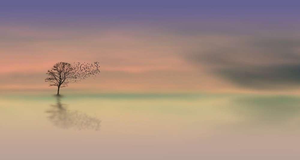 dawn calmness peace