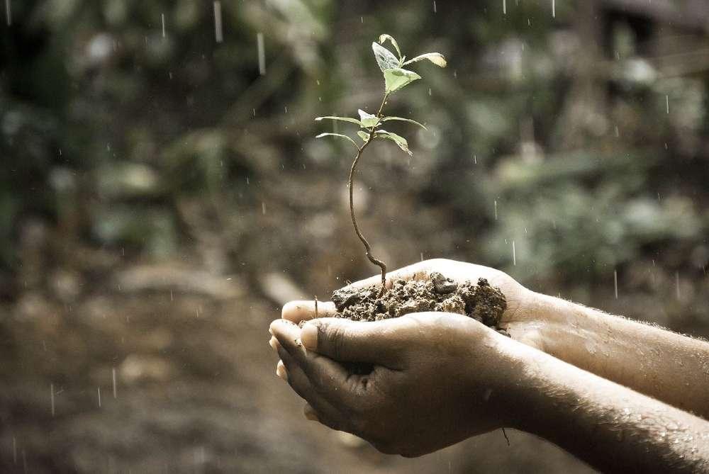 growing idea plant
