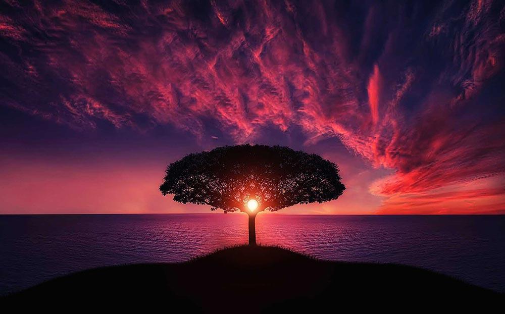 i wish i knew tree sunset