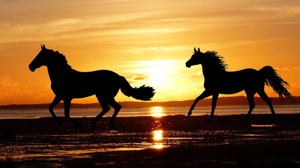 horses running on beach sunset