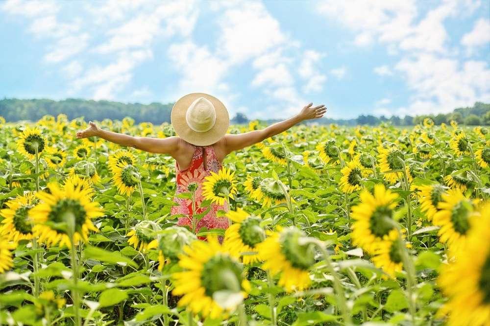 woman sunflowers sky